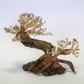 Ancient Pine Bonsai Wood Piece 23x17x10cm