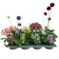 8x Alpines 1ltr Click & Collect Mix