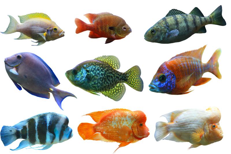 ... to Porton Garden Aquatic & Pets - Help & Advice - Indoor Aquatics